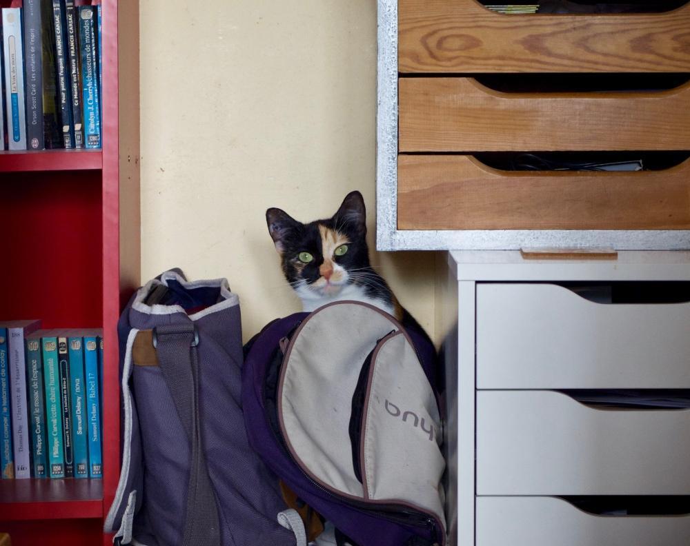 Photo de chaton, Shiva, qui est surprise derrière mon sac